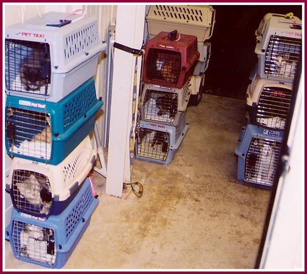 Cats in crates stacked three high and crowded in to a small area.