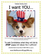 Dooley wants you to ask candidates to stop the suffering in puppy mills.