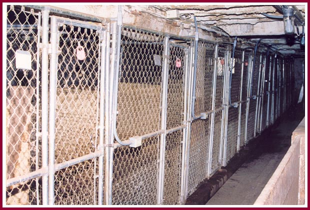 Whelping pens at Pretty Penny Kennel