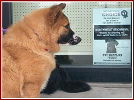 Josie, a foster pet looking for a new home, checks out the sign at the pet supply store hosting this adoption day.