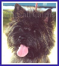 Stitch, a cairn terrier from Kirkwall Cairns, had a personal invitation to Westminster and Animal Planet!