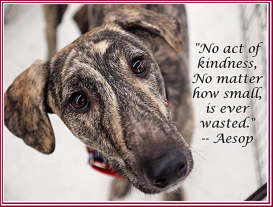 Manny says, Always chose kindness!