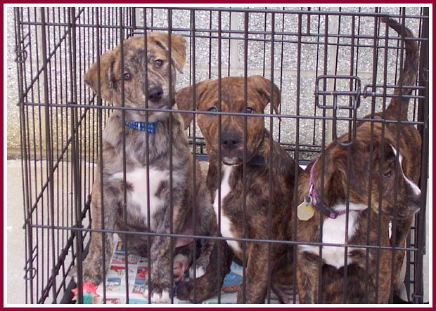 These puppies were going to be killed by a backyard breeder due to his own carelessness.