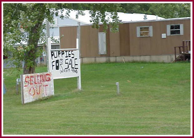 Puppies for sale sign in front of WI breeder