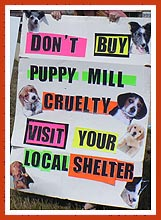 Sign from a pet store protest: Do not buy puppy mill cruelty -- visit your local shelter.