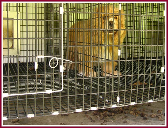 Another filthy cage, another sad dog.
