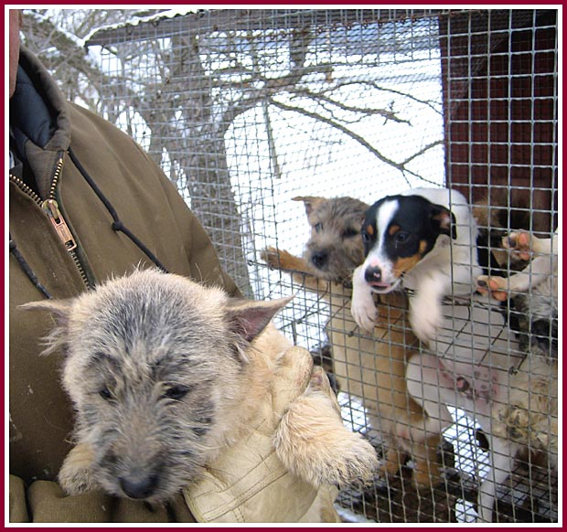 The miller is wearing a heavy jacket and gloves, while the puppies shiver in wire mesh cages in the snow.