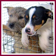 These puppies were living in a wire mesh cage outside in the dead of winter.