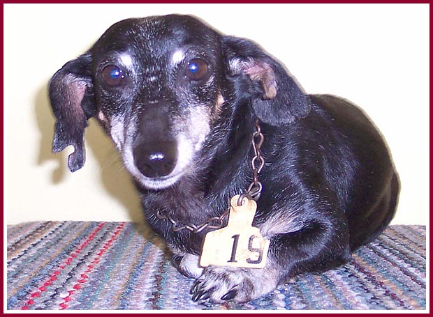 Mariah Hope, formerly known only as Tag 19, was a puppymill survivor. She had cattle tags punched through both ears, a tag on a rusted chain around her neck, and a brand burned into the top of her head.