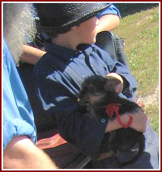 This is the pup being held in the boy's arms highlighted in the previous photo.