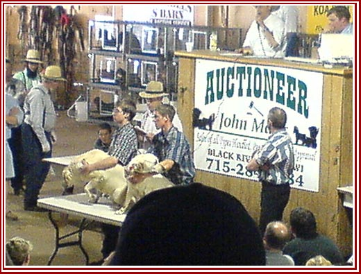 Undercover photo during a dog auction.