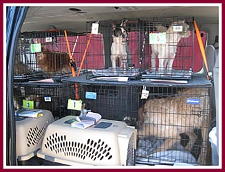 Some of the 200 dogs who were moved out of the temporary tents at Dane Co. HS, soon to be on their way to one of 14 other shelters in WI.