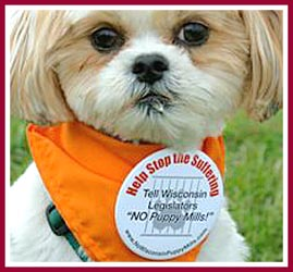 Bentley the puppy mill survivor at his first pet store protest in August 2008