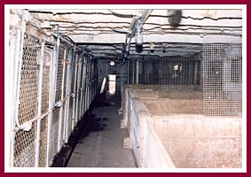 Inside the barn at Pretty Penny Kennel