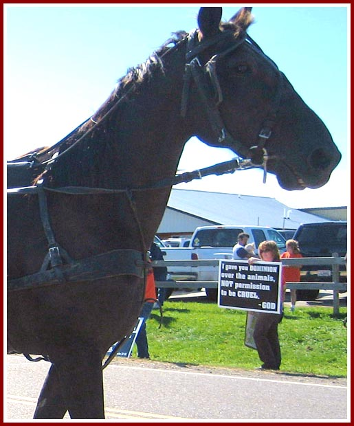 "A horse and buggy passes a protester with a sign stating ""I gave you dominion over animals, not permission to be cruel -- God"""