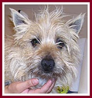 "Samuel the cairn terrier is ""undocumented."""