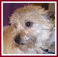 Susie the terrier pup was pregnant when purchased at the Thorp Dog Auction in March 2007.