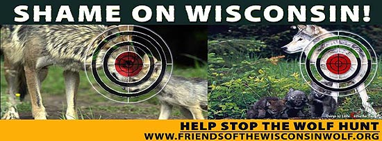 Billboard erected by the Friends of the Wisconsin Wolf in the Wisconsin Dells